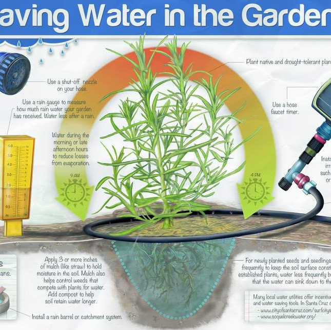 saving water in the garden chart